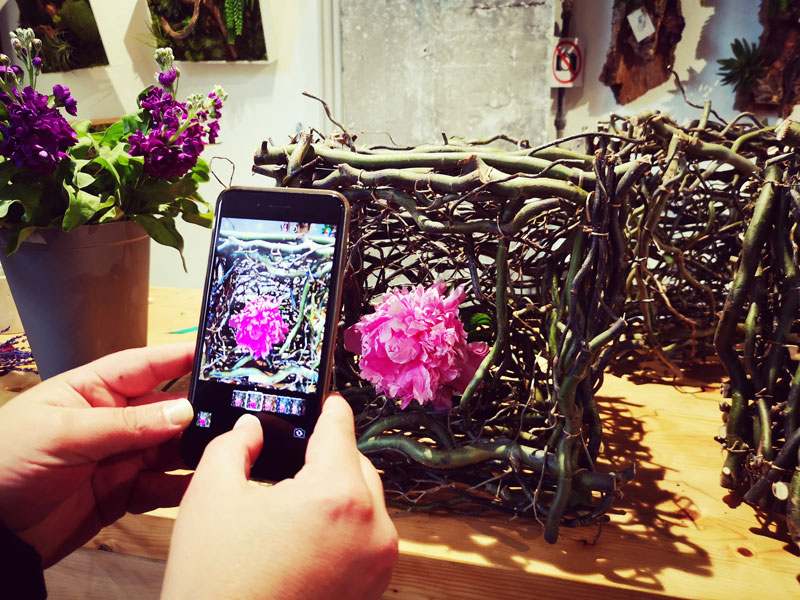 flores-para-decorar