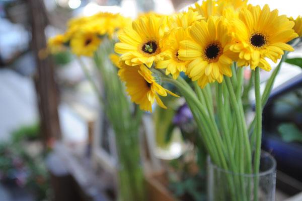 flor-de-la-semana-ramos